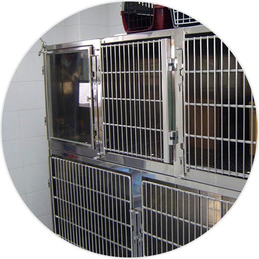 servicio-hospitalizacion-veterinaria