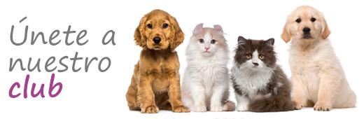 Precio de veterinarios en sevilla siendo socio del club tiene descuento