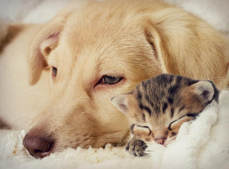 enfermedades comunes en perros y gatos