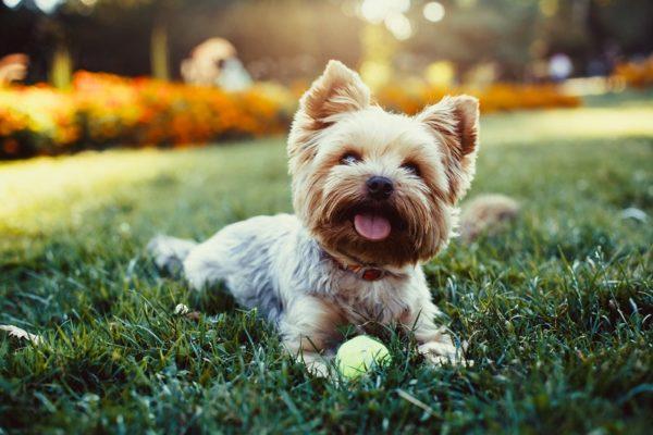 vacunar a un perro