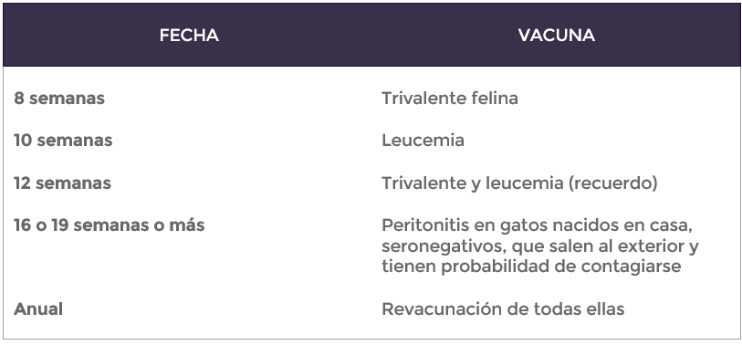 Vacunas Gatos Calendario.Calendario Vacunas Vitalcan