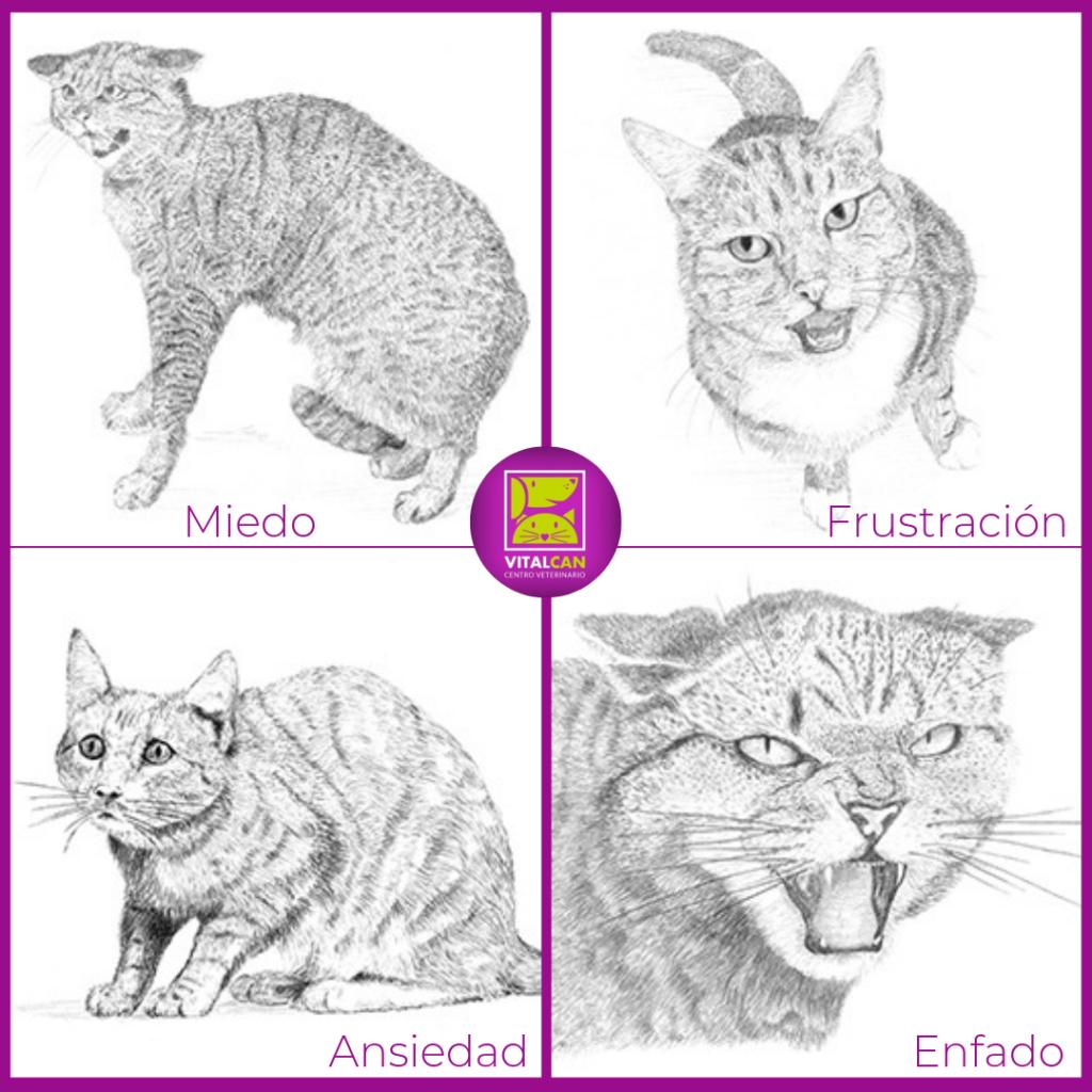 lenguaje corporal en gatos