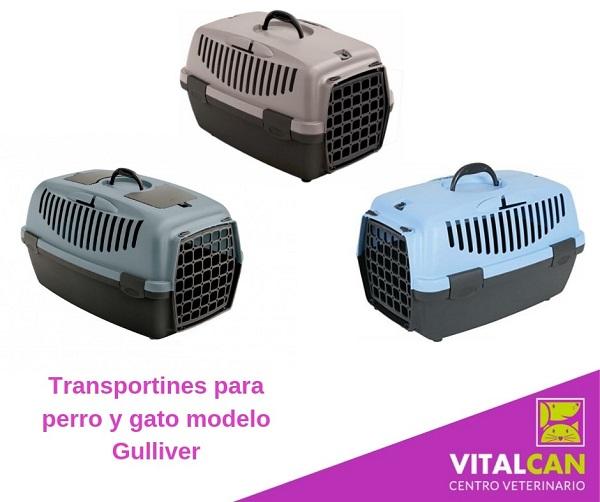 transportines para gatos, acostumbrar a un gato al transportín