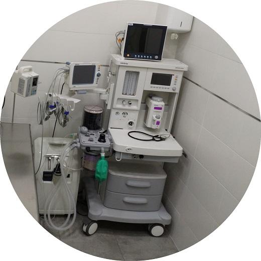 cirugía-veterinaria
