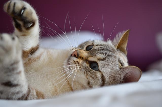 hacer que tu gato te quiera