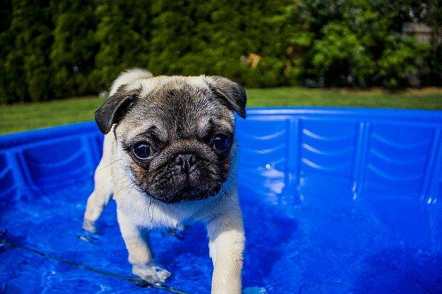 natación para perros